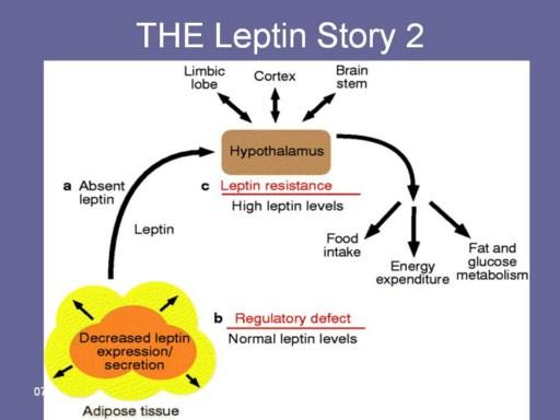 leptin thesis