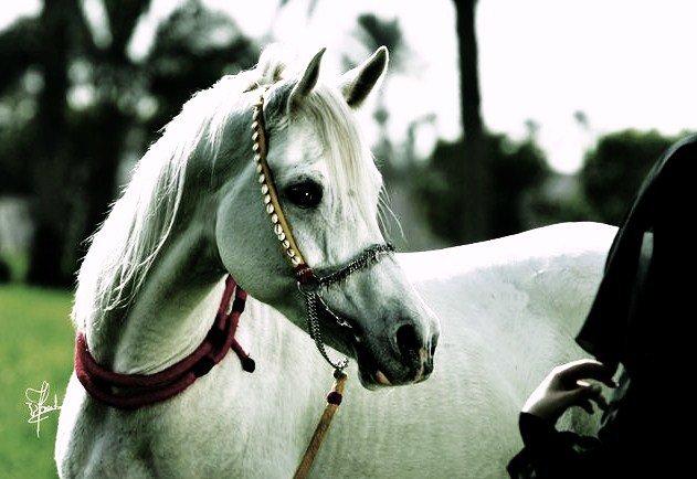 ديوان الشاعر امرؤا القيس في وصف الحصان