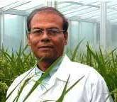 Swapan Datta, FNAAS, FNASc Currently, DDG (Crop Science), ICAR, Former Senior Scientist and HarvestPlus Rice Crop leader of CGIAR at IRRI. - 571_Datta2
